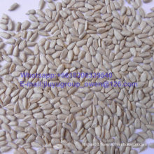 Top Quality Sun Flower Seed Kernel