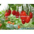 Ningxia Red Goji