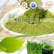Natural Green Wheat Grass Power