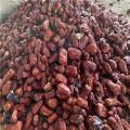 Qualité d'alimentation de poudre de jujube