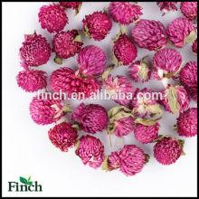 FT-004 séché Gomphrena Globosa en gros parfumé saveur fleur tisane