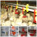 Automatische Chicken Feeder für Broiler