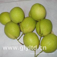 Nouvelle récolte de poire Shandong vert frais