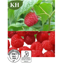 Raspberry Extract Ellagic Acid CAS: 476-66-4