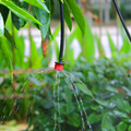 Irrigazione Micro Sprinkler for Agricultural