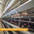 Good Design Poultry Layer Chicken Bird Cages
