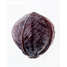 best price for good quality and delicious fresh purple cabbage
