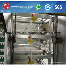 H Type Poulets Cages Poultry Equipment