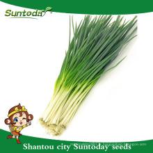 Suntoday légumes F1 organique jardin achat en ligne anglais d'eau plantant échalote de graines d'oignon vert (81003)