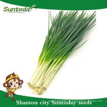 Suntoday vegetais F1 Organic jardim comprar on-line Inglês plantio de água cebolinha verde semente (81003)