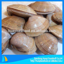 new landing frozen surf clam in shell