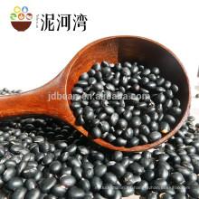 Alubias secas negras secas para conservas, alubias negras