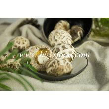 Champignon de grande fleur blanche séchée de haute qualité avec la taille différente