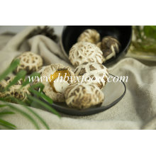 High Quality Dried Great White Flower Mushroom with Different Size