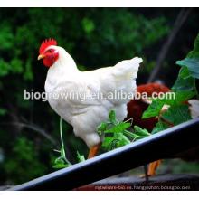 Feed Grade mejora la inmunidad y reduce el estrés, el maíz amarillo para la alimentación de las aves de corral