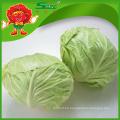 Repollo chino de col verde