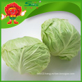 Chinese green cabbage round cabbage