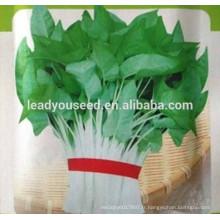 NWS01 Quandou Toutes sortes de graines de légumes de guangzhou, graines d'épinards de l'eau