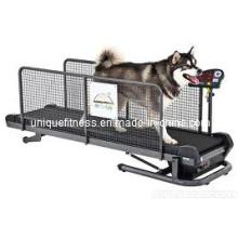 Собака беговая дорожка, ПЭТ беговая дорожка, работает машина беговая дорожка