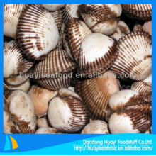 cheap frozen good blood clam low price best supplier