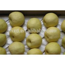 2014 года СУ Dangshan груша/китайский сладкий груша/груша Шэньси гун