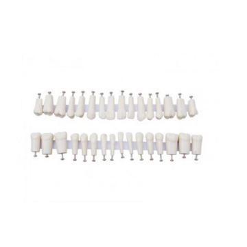 TM-D7 Permanent Teeth Model with Straight Roots