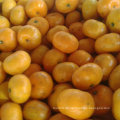 Golde Lieferant für Süßes Baby Mandarin