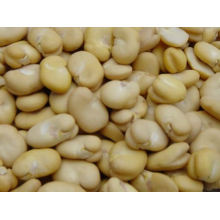 Peeled Horse Bean 2017 New Crop Qinghai Origin