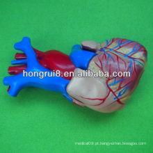 ISO Tamanho da vida Modelo do coração humano, modelo educacional do coração, coração da anatomia