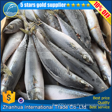 Hot Sell To Egypt Frozen Pacific Mackerel fish
