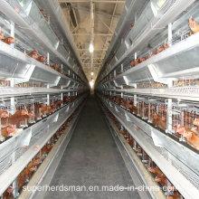 Auto Poultry Farm Machinery für Schichten und Broiler