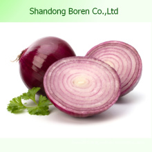 Fresh Vegetables Fresh Red Onion Fresh Onion