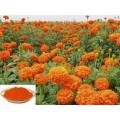 Marigold Extract Lutein Zeaxanthin Og Best Price