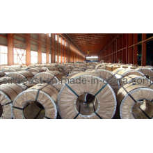 Hot Sale Galvanized Steel Coil & Best Price Galvanized Steel Coil