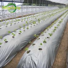Agujeros perforados para plantas ldpe mulch film