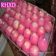 new season apple fruit China shandong red fuji apples India standard