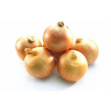 4-6cm Vente chaude oignon jaune frais