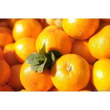 Honig Baby Orange