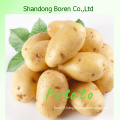 Offering The New Vegetable High Quality Fresh Potatoes