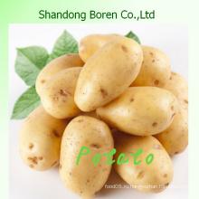 Дайте вам высококачественный свежий картофель