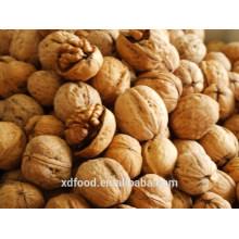 common Thin skin Walnuts in Shel, Unshelled Walnuts