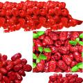 2016 neue chinesische getrocknete rote Daten Jujube Bulk zum Verkauf