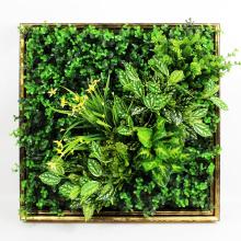 Nuevo diseño bajo costo arte 3D planta verde muro de cobertura para la decoración