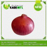 High Quality Of Fresh Onion From China