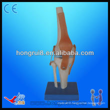 High quality Vivid Life size Artificial Knee Joint Model skeleton model