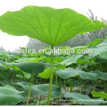 Flower tea Lotus leaf tea