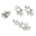 Colección de flores Colección de joyas al por mayor de moda AAA CZ 925 Silver Set (S3304)