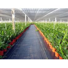 Red de sombrilla para la casa vegetal