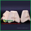 VERKAUFEN 12588 Oral Zahnspalte Lip Suture Training Modell weich