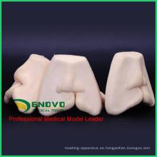 VENDER 12588 oral sutura labial hendidura sutura modelo de entrenamiento suave